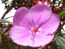 Macro cor-de-rosa da flor em um jardim imagem de stock royalty free