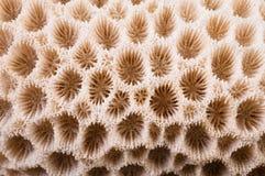 Macro coralina Foto de archivo libre de regalías