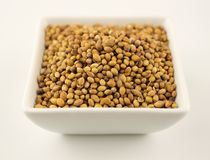 Macro of coriander seeds in a bowl  on white Royalty Free Stock Images