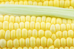 Macro of Corn on the Cob Stock Photo