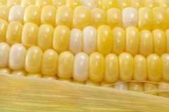 Macro Corn on the Cob Stock Images
