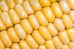 Macro corn cobs texture Stock Photo