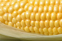 Macro Corn Kernels Royalty Free Stock Images