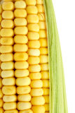 Macro corncob Stock Photography