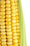 Macro corncob Stock Photography