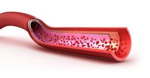 Macro cortado do vaso sanguíneo com eritrócites ilustração royalty free