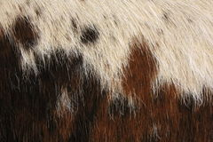 Macro Cow Hide 1. Macro photo of brown and white cow hide stock photography