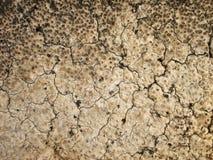 Macro cracks on the stump background Royalty Free Stock Photo