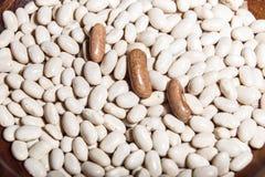 Macro cru do close up dos feijões brancos Fotografia de Stock