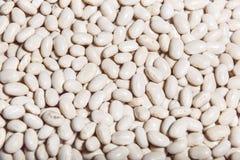 Macro cru do close up dos feijões brancos Imagens de Stock