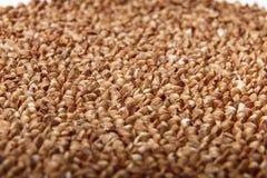 Macro cruda del primo piano del grano saraceno Fotografia Stock Libera da Diritti