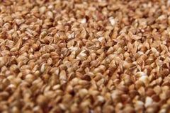 Macro cruda del primo piano del grano saraceno Fotografia Stock