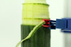 Macro from cucumber peeling Stock Photo