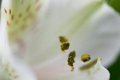 Macro détail abstrait de fleur Images libres de droits