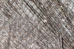 Macro détail d'un logarithme naturel en bois de cutten image libre de droits