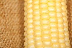 Macro d'épi de maïs Photos libres de droits