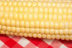 Macro d'épi de maïs Photographie stock