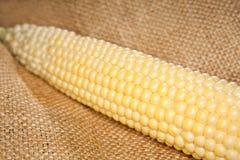 Macro d'épi de maïs Photographie stock libre de droits