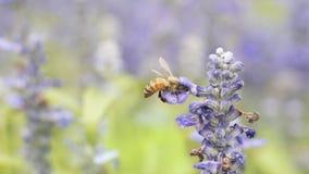 Macro d'abeille avec les fleurs fraîches Photographie stock libre de droits
