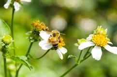 Macro d'abeille avec les fleurs fraîches Image stock
