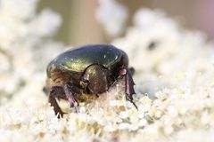 Macro d'insecte image stock