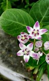 Macro d'un groupe de fleur images stock