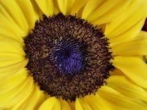 Macro d'une fleur Images stock