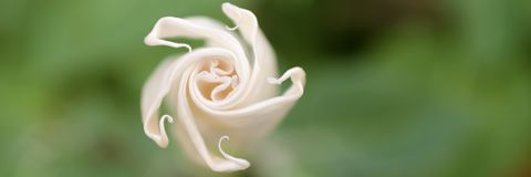 Macro d'une fleur en spirale blanche Photographie stock libre de droits