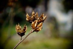 Macro d'usine d'herbe de mauvaise herbe de printemps Images libres de droits