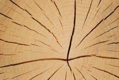 Macro da árvore Fotos de Stock Royalty Free
