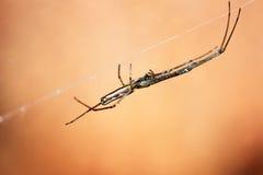 Macro da aranha Imagens de Stock Royalty Free
