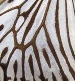 Macro da asa da borboleta Fotografia de Stock Royalty Free