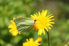 Macro da borboleta Imagem de Stock