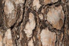 Macro da casca de árvore Imagens de Stock
