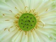 Macro da flor imagens de stock