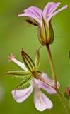 Macro da flor fotografia de stock royalty free
