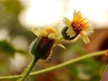 Macro da flor Imagem de Stock Royalty Free