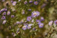 Macro da flor coberto com a neve Fotografia de Stock Royalty Free