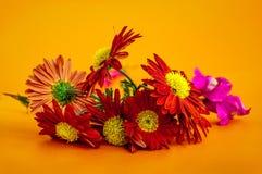 Macro da flor de Gerber imagem de stock
