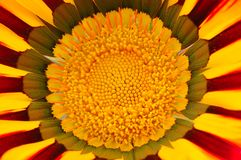 Macro da flor do Gazania imagens de stock royalty free