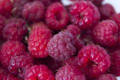 Macro da framboesa vermelha doce frutos frescos do deserto Fotografia de Stock