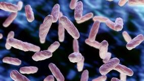 Macro da infecção da bactéria ilustração royalty free
