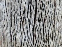 Macro da madeira lançada à costa Imagem de Stock Royalty Free