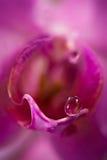 Macro da orquídea Imagens de Stock Royalty Free