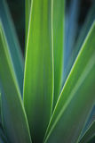 Macro da palma Imagem de Stock
