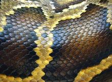 Macro da pele de serpente Imagens de Stock