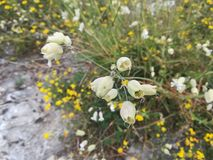 Macro da planta da floresta da flor da floresta Imagem de Stock Royalty Free