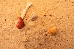 Macro da praia Imagens de Stock Royalty Free