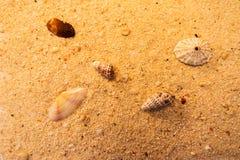 Macro da praia Imagem de Stock Royalty Free
