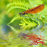 Macro damselfly on fern above water Stock Photos